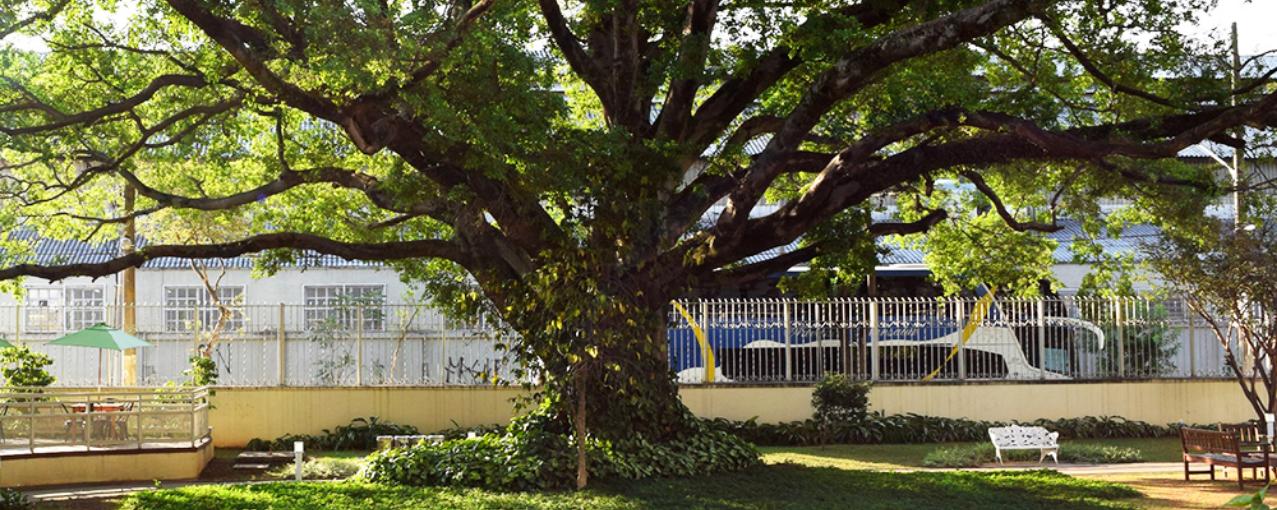 Foto de árvore no jardim
